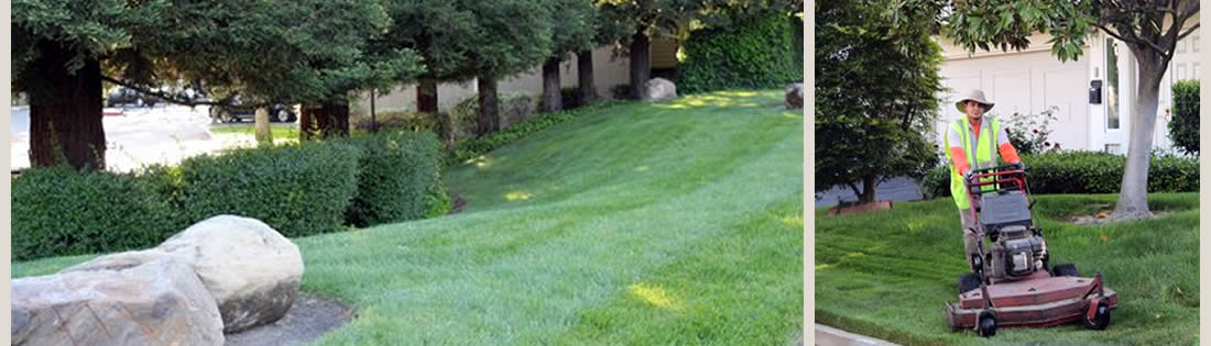 About The Landscape Company Property Landscaping Management ... - About The Landscape Company|Landscaping|Landscape Services