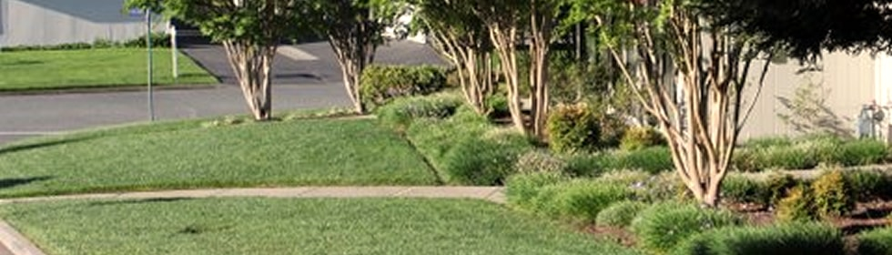 About The Landscape Company Property Landscaping Management